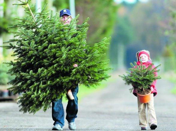 Weihnachtsbaum selber schlagen chemnitz europ ische weihnachtstraditionen - Weihnachtsbaumverkauf hamburg ...