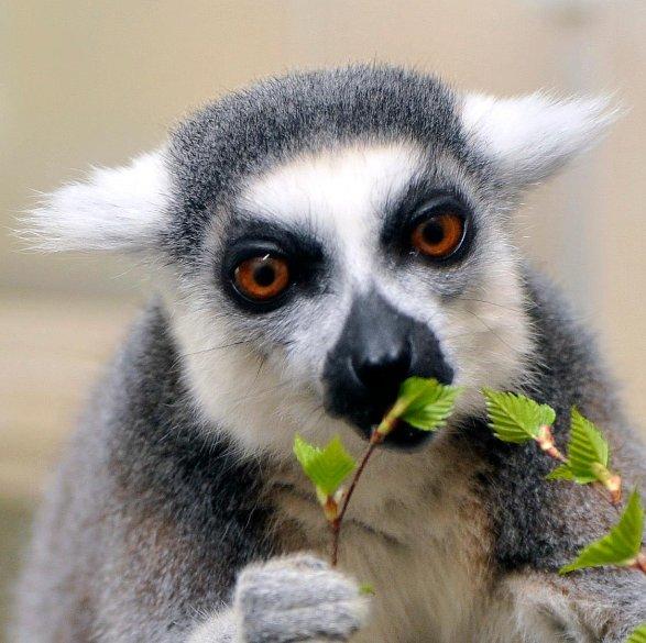 Nurnberg Geschmuggelte Affen Haben Ein Neues Zuhause Nurnberg