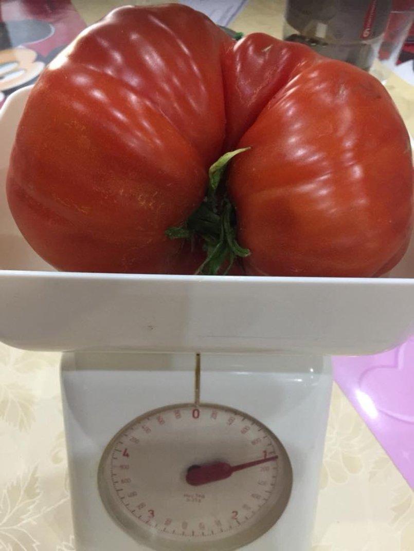 Dicke Kurven Weicher Kern Die Größten Tomaten Unserer Leser