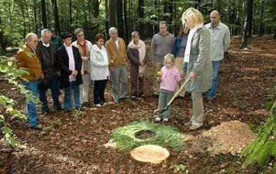 Letzte Ruhestatte An Den Wurzeln Eines Baums Auerbach