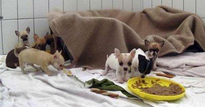 Tierheim Feucht Schmuggelwelpen Suchen Liebevolles Zuhause Feucht Nordbayern De