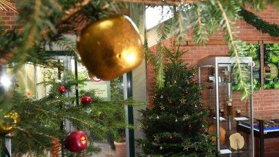 Geschichte Weihnachtsbaum.Erlangen In Erlangen Die Geschichte Des Weihnachtsbaums